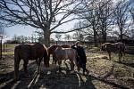 Zdeničku strašně obdivuju, za tu její vášeň, jak se stará o koně.