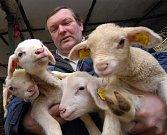 Na kozí farmě Fipobex v Pěnčíně se jaro ukazuje přírůstky mnoha desítek mláďat ovcí i koz.Našla se mezi nimi i ovčí čtyřčata což je velmi neobvyklý počet.