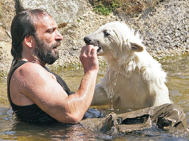 Medvěd Knut dovádí se svým ošetřovatelem. Už to není malá bílá kulička.