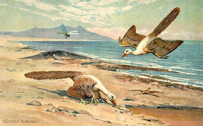Archeopteryx na obrazu Heinricha Hardera (1858-1935)