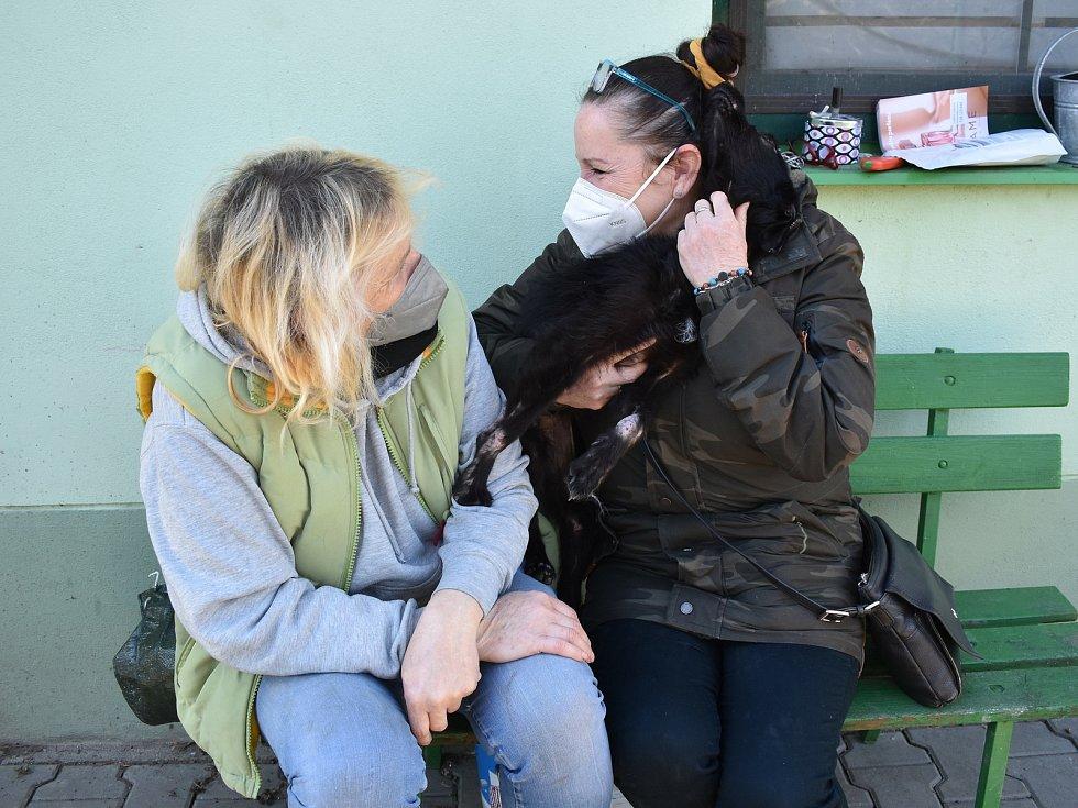 Fenka Nelinka, která byla nalezena na Klatovsku ve velmi zuboženém stavu, s čumáčkem přelepeným izolační páskou, se zotavuje v klatovském útulku v péči Miloslavy Šeflové. V tmavém je zachránkyně psa Marcela Koupšetová.