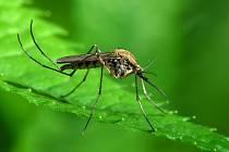 Zdravotnické orgány na Kubě varovaly před zvýšeným výskytem moskytů, kteří by mohli v některých městských oblastech přenášet nemoci jako je žlutá zimnice nebo horečnaté onemocnění dengue.
