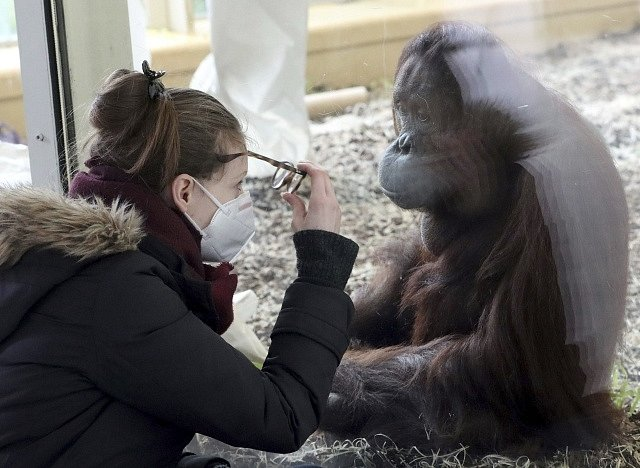 Návštěvnice vídeňské zoo Schoenbrunn v době koronaviru