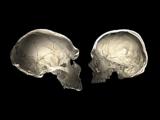 Srovnání lebky neandertálce s lebkou moderního člověka