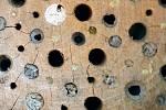 Samotářky si hnízdní dutinky samy zazdí.