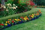 Pro založení živého plotu je ideálním časem podzim, máte proto dost času zvážit, jaké rostliny vyberete.