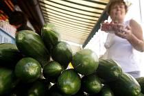 Kvůli závadným okurkám ze Španělska se více prodává zelenina z Čech. Na snímku okurky z Třtěnic na Jičínsku prodávané na Havelském trhu v Praze 31. května 2011.