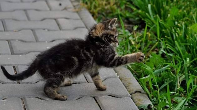 Řada lidí toulavou kočku vyžene, někteří se ale nad ní ustrnou a ubytují si ji doma.