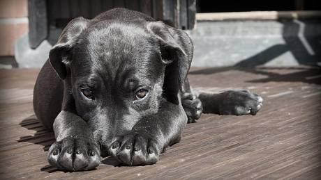 Pes. Ilustrační foto