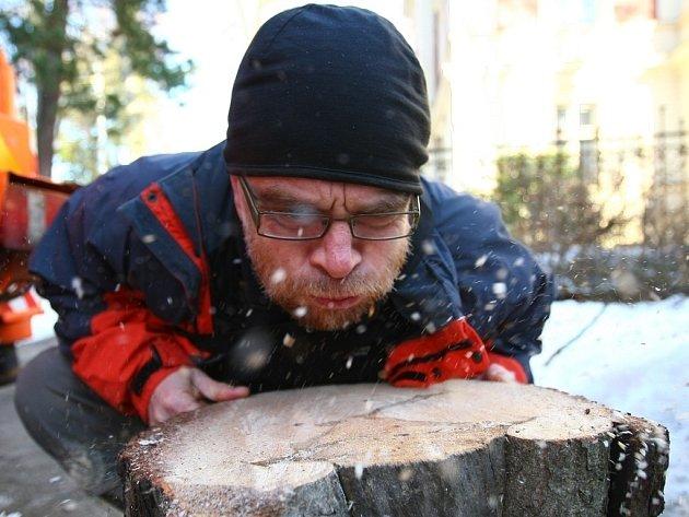 Zahájení kácení napadených stromů v aleji Masarykovy ulice v Liberci.