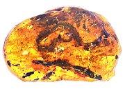 Fosílie mláděte hada Xiaophis myanmarensis uchovaná v jantaru.