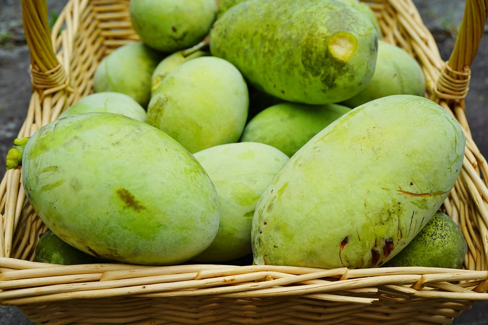 Ovoce zvané muďoul