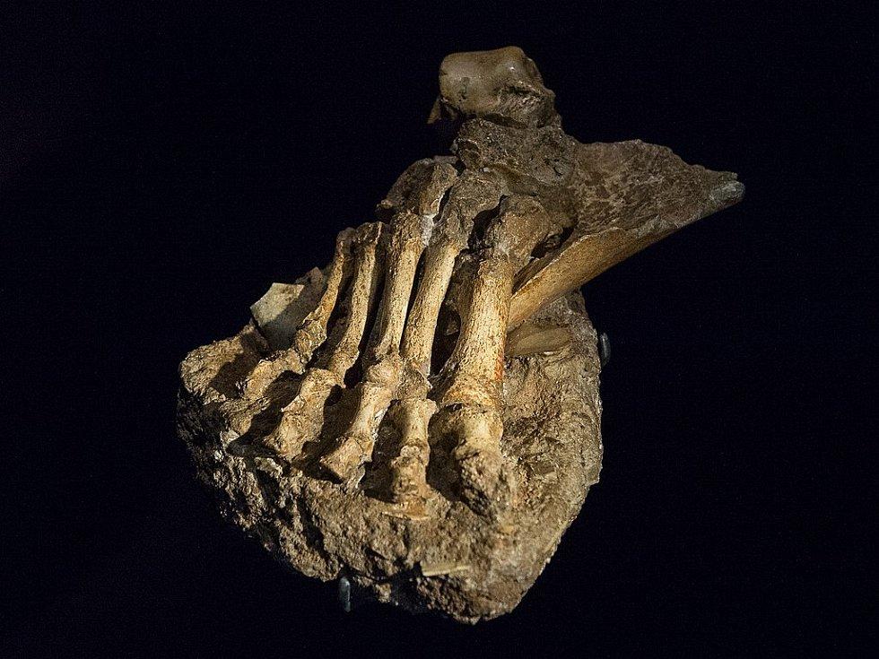 Kostěné ostatky pravého chodidla neandrtálce z L Ferrassie