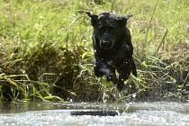 Pes. Ilustrační snímek