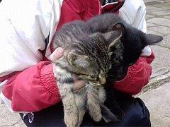 Zachráněná koťata z Rosic.