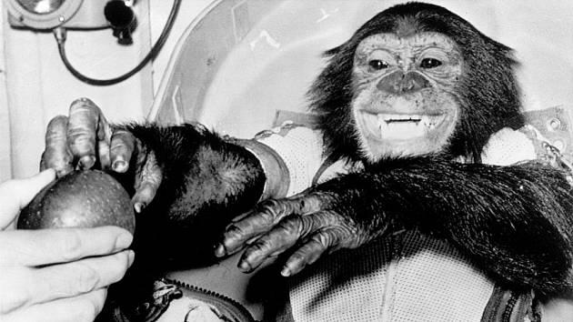 Šimpanz Ham po úspěšném dokončení zkušebního letu Mercury-Redstone 2. Po vyzdvižení návratové kosmické kabiny v Atlantiku si s nadšením pochutnal na jablku