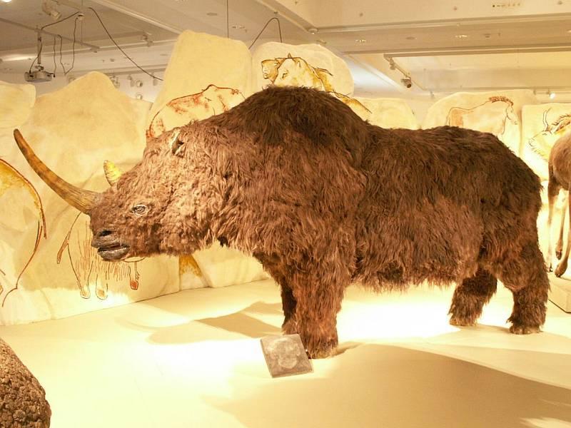 Model nosorožce srstnatého v Maďarském muzeu přírodních dějin