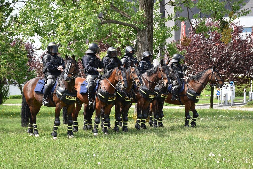 Policejní koně ale musí zůstat klidní, nepanikařit, neplašit se a za všech okolností poslechnout své jezdce.