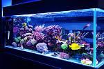 Součástí našeho obývacího pokoje je obří akvárium. Stěhovat pět set litrů bylo nezapomenutelné vzrůšo.