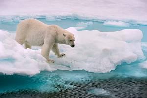 Lední medvěd. Ilustrační snímek