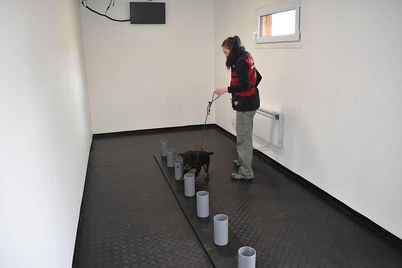 Výcvik je náročný, vnímavý pes ho ale dokáže zvládnout i za čtrnáct dní.