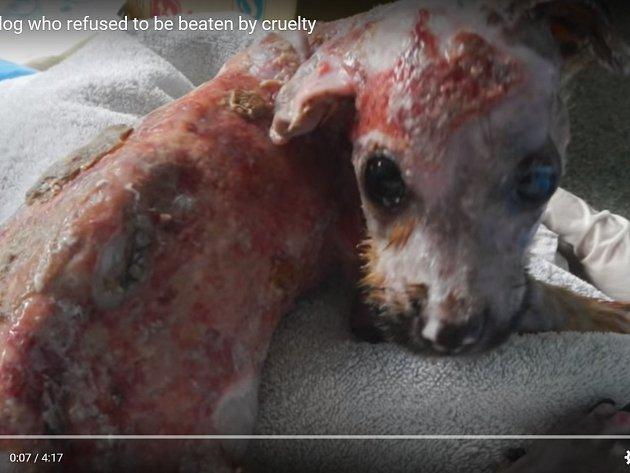 Malý Tuffy má po bezcitném zacházení páníčka popáleniny a je ve zbědovaném stavu.