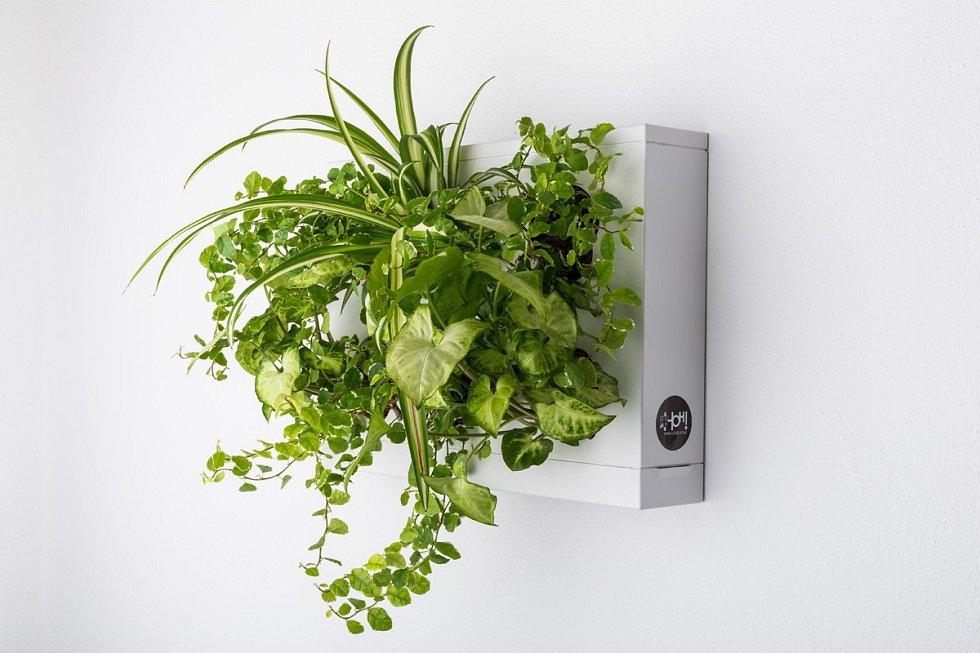 Obraz ze živých rostlin