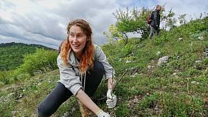 Reportáž z likvidace invazního borytu na svazích Pálavy. Dobrovolníci rostlinu ručně vytrhávají a pomáhají tím ochráncům tamní přírodní rezervace.