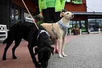 Psi vycvičení k hledání lidí nakažených koronavirem