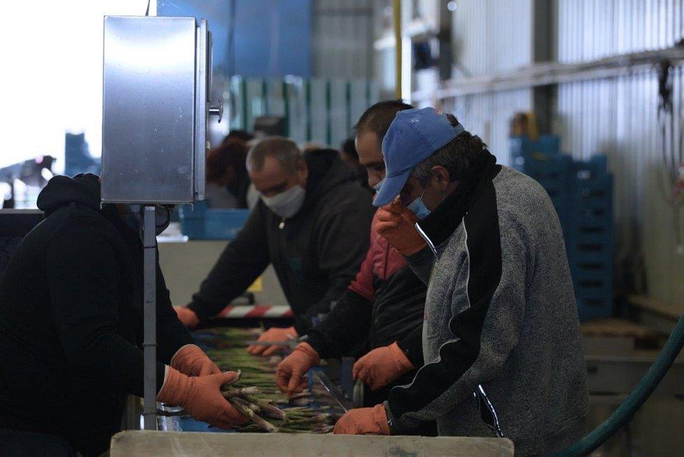 Většina produkce společnosti Český chřest z polí u Hostína zůstává vtuzemsku. Zájem o lahodný český unikát je i vzahraničí – míří do Holandska a Německa, ale klidně ho koupíte v Hongkongu či Dubaji.