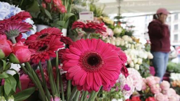 Květiny. Ilustrační snímek