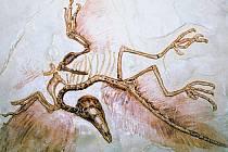 Podle výzkumu genetické informace z ptačích fosilií, pocházejí tito křídlatí živočichové z období druhohor. Jsou tedy mnohem starší, než se předpokládalo.