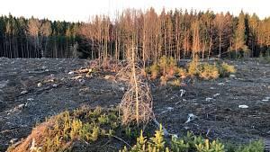 Spící město: záběry lesa zničeného kůrovcem.