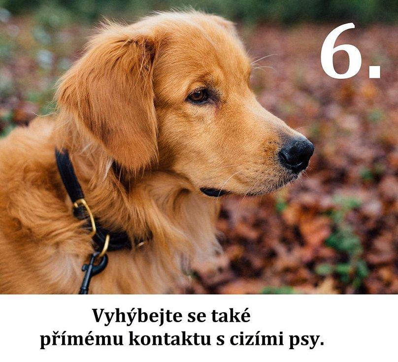 Vyhýbejte se přímému kontakty s cizími psy.