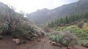 Gran Canaria. Borovicové lesy i skalnaté vrcholky.