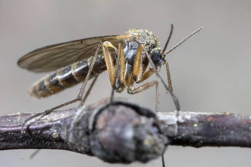 Po světě poletuje přes tři tisíce druhů komárů sajících krev teplokrevných živočichů.