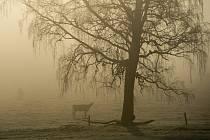 Mlhavé a mrazivé ráno na Šumavě