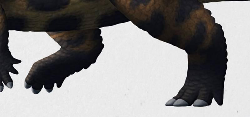 Detail krokodýlích nohou