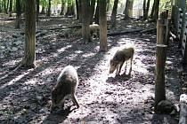 Brněnská obora Holedná nabízí návštěvníkům naučnou stezku i volně žijící zvěř.