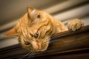 Kočka. Ilustrační foto