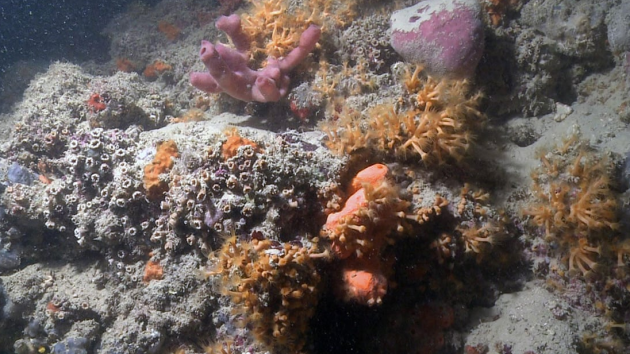 Vědci objevili první italský korálový útes
