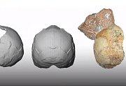 Stáří lebečního fragmentu se odhaduje na 210 tisíc let