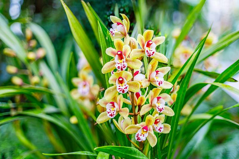 Ještě před pár desítkami let jste se mohli těšit krásou orchidejí jen v botanických zahradách.