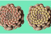 Spočítejte, kolik spirál se stáčí proti směru hodinových ručiček a kolik po směru. U téhle šišky borovice černé je to například 13 a 8