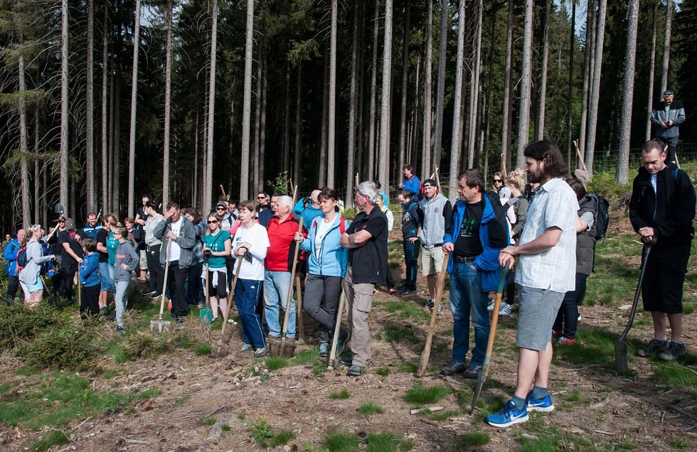 Sázení stromků na Šumavě.