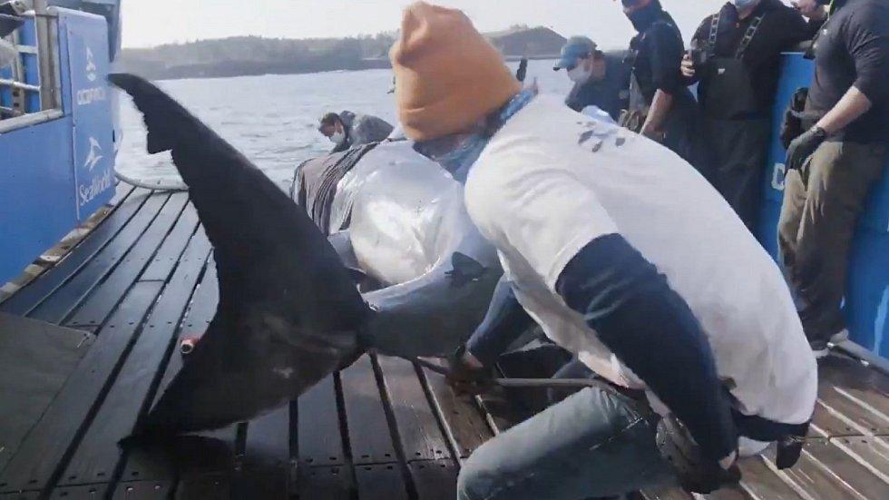 Žralok se prohání kolem kanadského pobřeží už padesát let