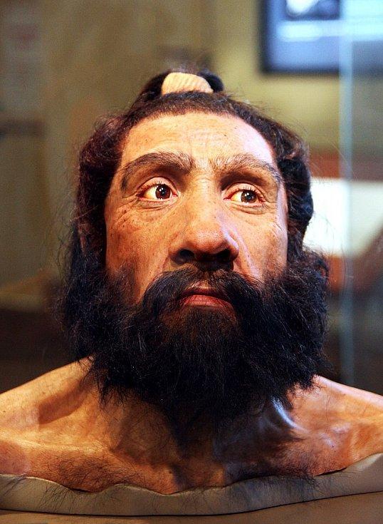 Model dospělého neandrtálce ve Smithonianově muzeu přírodní historie ve Washingtonu