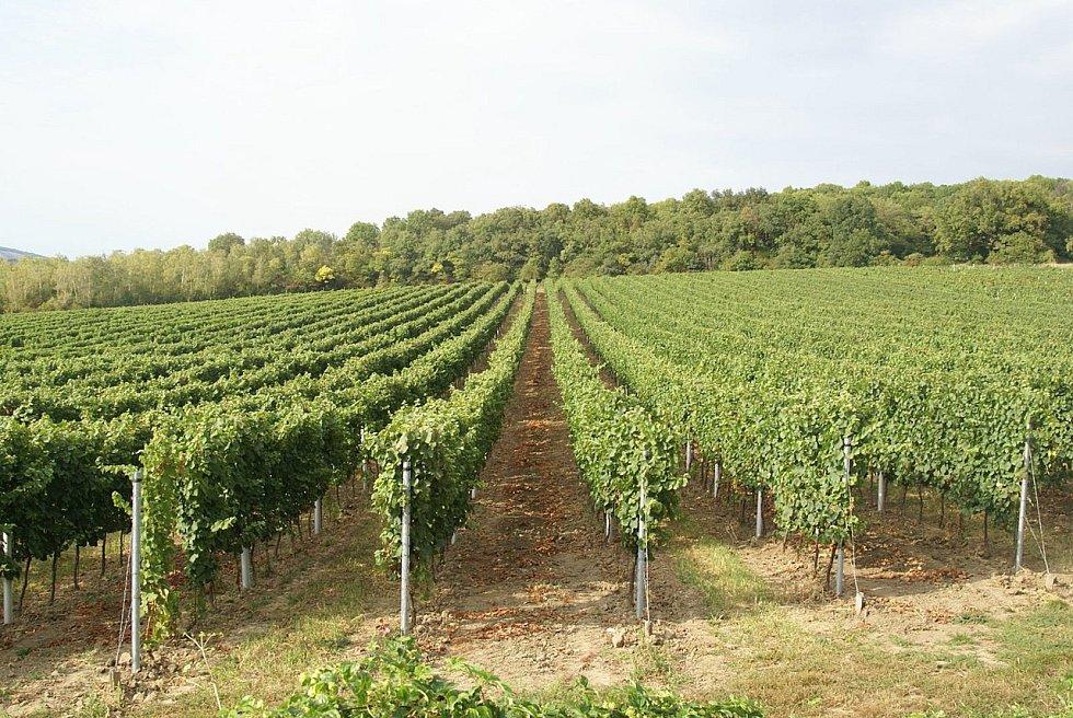 Mikulovské vinice