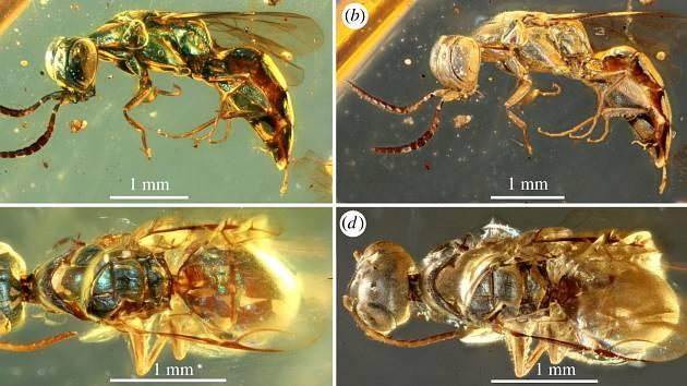V kusu jantaru ze severního Myanmaru se dochoval rozmanitý hmyz, jehož povrch těla se vyznačuje strukturálním zbarvením