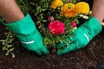 Nyní můžeme přistoupit kvysázení květin.